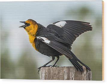 Wood Print featuring the photograph Yellow-headed Blackbird by Yeates Photography
