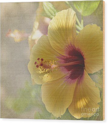 Yellow Hibiscus Wood Print by Peggy Hughes