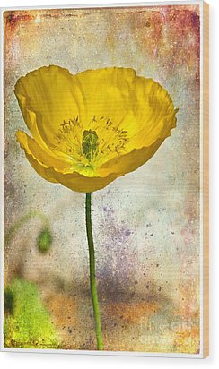 Yellow Icelandic Poppy And Texture Wood Print