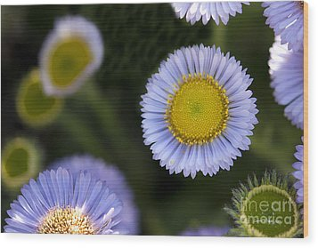 Yellow In The Middle Wood Print by Artist and Photographer Laura Wrede
