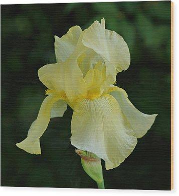 Yellow Iris Wood Print by Sandy Keeton