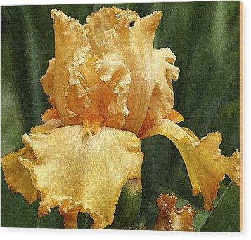 Yellow Iris Wood Print by Susan Crossman Buscho