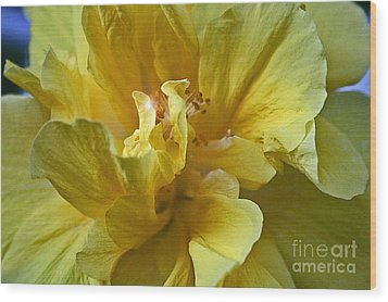 Wood Print featuring the photograph Yellow Is Yellow by Alison Caltrider