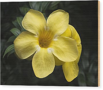 Yellow Wood Print by Kim Andelkovic
