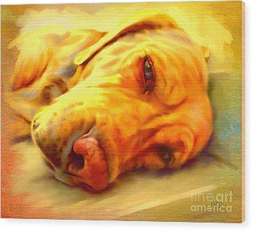 Yellow Labrador Portrait Wood Print by Iain McDonald