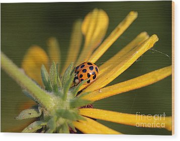 Wood Print featuring the photograph Yellow Lady - 2 by Kenny Glotfelty