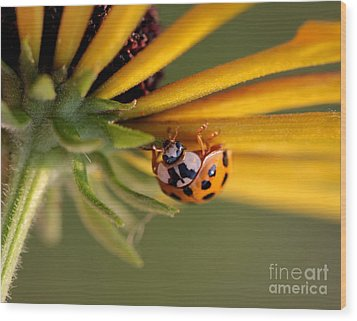 Wood Print featuring the photograph Yellow Lady - 3 by Kenny Glotfelty