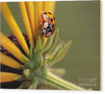 Wood Print featuring the photograph Yellow Lady - 4 by Kenny Glotfelty