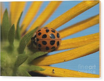 Wood Print featuring the photograph Yellow Lady Bug - 5 by Kenny Glotfelty