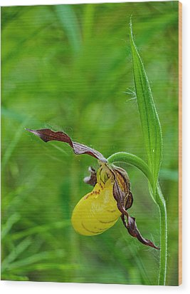 Yellow Lady's Slipper Wood Print