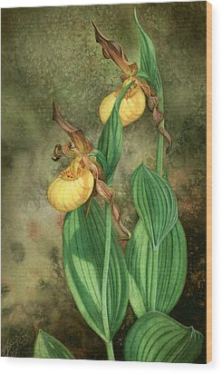 Yellow Lady's Slippers Wood Print