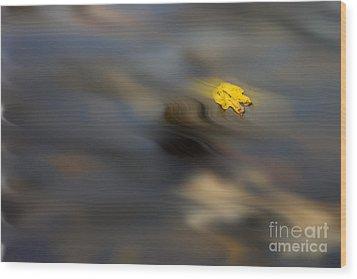 Yellow Leaf Floating In Water Wood Print by Dan Friend