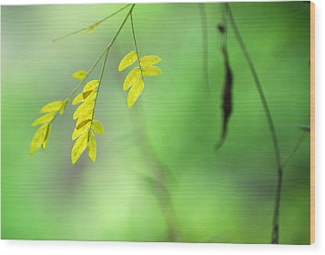 Yellow Leaves Wood Print by Guido Montanes Castillo