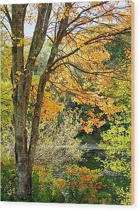 Yellow Leaves Wood Print by Janice Drew