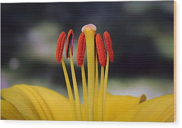 Wood Print featuring the photograph Yellow Lily by Glenn DiPaola