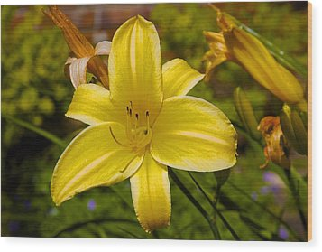 Yellow Lily Wood Print by Terry Horstman