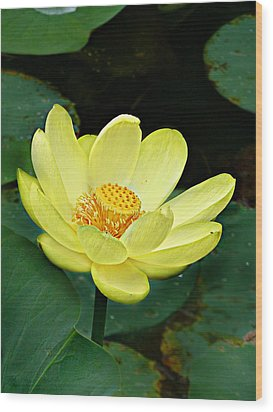 Wood Print featuring the photograph Yellow Lotus by William Tanneberger
