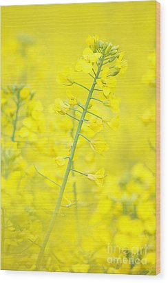 Yellow Makes Me Happy Wood Print by Angela Doelling AD DESIGN Photo and PhotoArt