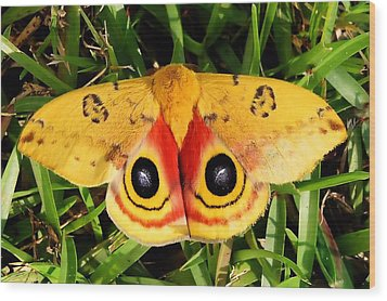 Yellow Moth Wood Print by Ed Roberts