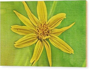 Yellow Mountain Bloom Wood Print