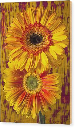 Yellow Mums Together Wood Print by Garry Gay