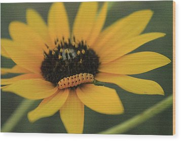 Wood Print featuring the photograph Yellow On Yellow by Alicia Knust