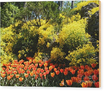 Wood Print featuring the photograph Yellow Orange - Springtime by Phil Banks