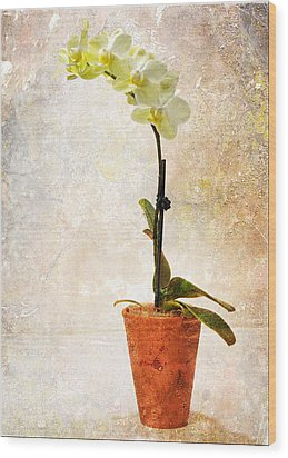 Yellow Orchid Wood Print by Patti Deters