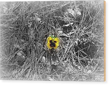 Wood Print featuring the photograph Yellow Pansy by Tara Potts