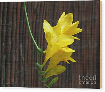 Yellow Petals Wood Print by HEVi FineArt