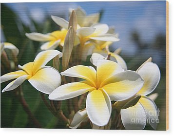 Yellow Plumeria Wood Print