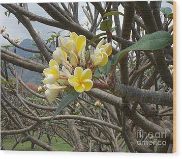 Yellow Plumeria  Wood Print by Mindy Sue Werth