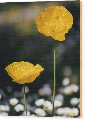 Yellow Poppies Wood Print