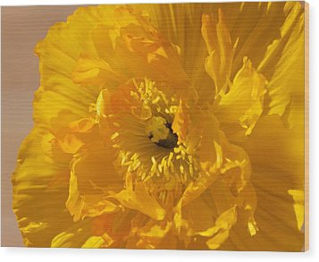 Yellow Poppy Wood Print by Bonita Hensley