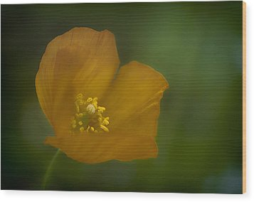 Wood Print featuring the photograph Yellow Poppy by Jacqui Boonstra