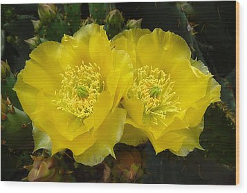 Wood Print featuring the photograph Yellow Prickly Pear Twins by Cindy McDaniel