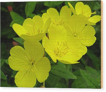 Yellow Primrose Wood Print by Gene Cyr