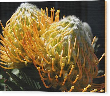 Yellow Proteas Wood Print