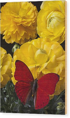 Yellow Ranunculus And Red Butterfly Wood Print by Garry Gay