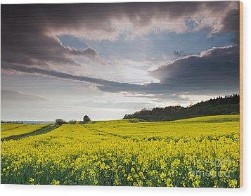 Yellow Rapeseed Field Beautiful Wood Print by Boon Mee