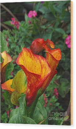 Wood Print featuring the photograph Yellow Red Calla Lily by Eva Kaufman