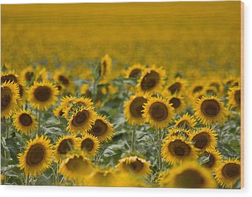 Wood Print featuring the photograph Yellow by Ronda Kimbrow