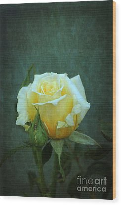 Wood Print featuring the photograph Yellow Rose 2014 by Marjorie Imbeau