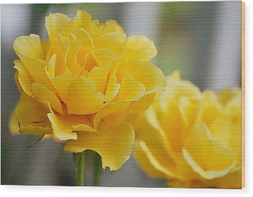 Wood Print featuring the photograph Yellow Rose by Amee Cave