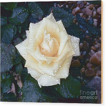 Wood Print featuring the photograph Yellow Rose At Dawn by Alys Caviness-Gober