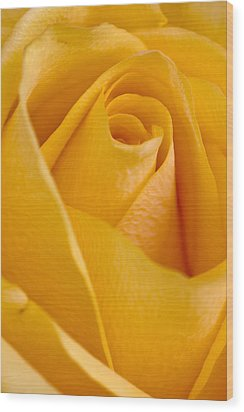 Yellow Rose Wood Print by Bob Noble Photography