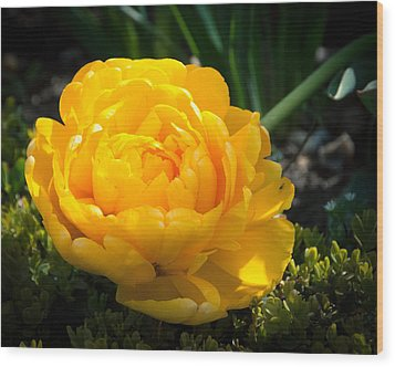 Wood Print featuring the photograph Yellow Rose by Dee Dee  Whittle