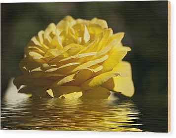 Yellow Rose Flood Wood Print by Steve Purnell