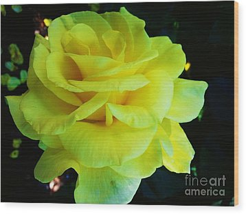 Yellow Rose Wood Print by Heather L Wright