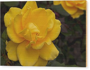 Wood Print featuring the photograph Yellow Rose by Ivete Basso Photography